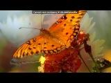 «Бабочки.» под музыку В деревне - Полевые цветы. Picrolla