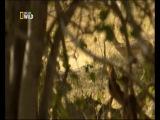 Природа и животные: леопард